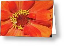 Orange Flower Macro Greeting Card