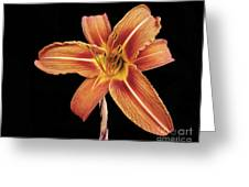 Orange,  Flower Greeting Card