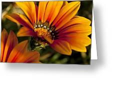 Orange Flower Print Greeting Card