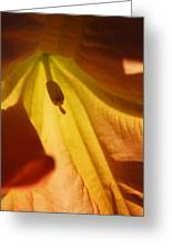 Orange Flower Stamen Greeting Card