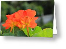 Orange Flowers On A Plant Greeting Card