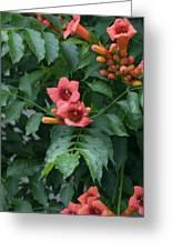 Orange Flowers On A Vine Greeting Card