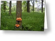 Orange Fungi On A Tree Greeting Card