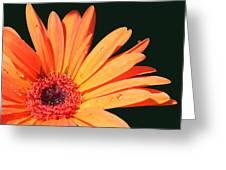 Orange Gerbera On Black Right Side  Greeting Card