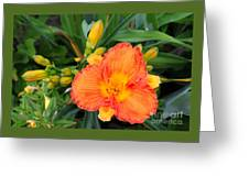 Orange Gladiola Flower And Buds Greeting Card