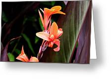 Orange Gladiolus Greeting Card