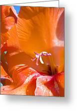 Orange Gladiolus Greeting Card