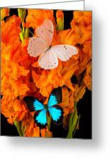 Orange Glads With Two Butterflies Greeting Card