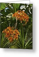 Orange Globes Greeting Card
