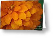 Orange Glow Greeting Card