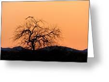 Orange Glow Sunset In The Desert Greeting Card