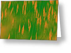 Orange Grass Spikes Greeting Card