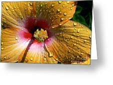Orange Hibiscus II With Water Droplets Greeting Card