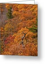 Orange Hill Greeting Card