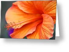 Orange Hybiscus Greeting Card