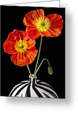 Orange Iceland Poppies Greeting Card by Garry Gay