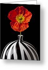 Orange Iceland Poppy Greeting Card