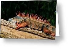 Orange Iguana Close Up Greeting Card