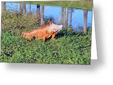 Orange Iguana Greeting Card