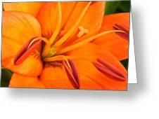 Orange II Greeting Card