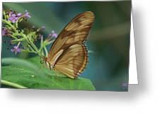 Orange Julia Greeting Card
