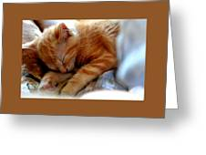 Orange Kitten Sleeping In Silk And Satin Greeting Card