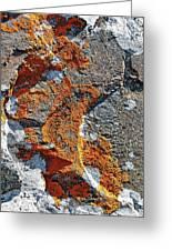Orange Lichen Greeting Card