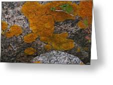 Orange Lichen On Granite Greeting Card