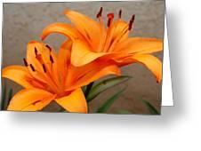 Orange Lilies 2 Greeting Card