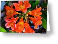 Orange Trumpet Flowers At Pilgrim Place In Claremont-california Greeting Card