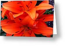 Orange Lily Closeup Digital Painting Greeting Card