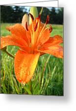 Orange Lily Dew Drop Greeting Card