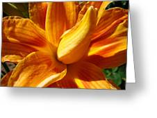 Orange Lily Flower Art Print Summer Lilies Baslee Greeting Card