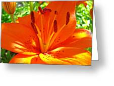 Orange Lily Flower Art Print Summer Lily Garden Baslee Troutman Greeting Card