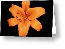 Orange Lily On Black Greeting Card