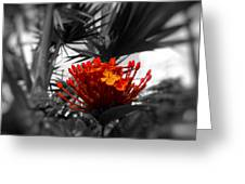 Orange Magnificence  Greeting Card