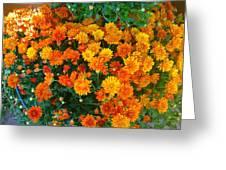 Orange Margarita Daisy Greeting Card