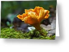 Orange Mushroom Flower On The Forest Floor Greeting Card