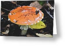 Orange Mushroom Greeting Card
