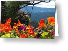 Orange Nasturtium Against Mountains Greeting Card