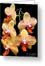 Orange Orchid Phalaenopsis Greeting Card