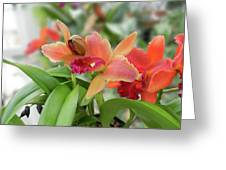 Orange Orchids 2 Greeting Card