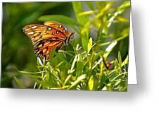 Orange Passion Greeting Card