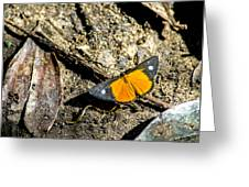 Orange Patch Greeting Card