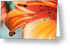 Orange Petal Dreams Greeting Card