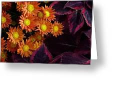 Orange Petals And Purple Leaves Greeting Card