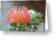 Orange Pincushion Protea Greeting Card