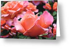 Orange-pink Roses  Greeting Card