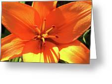 Orange Pop Greeting Card