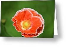 Orange Poppy 2 Greeting Card